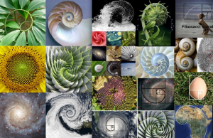 collage-spirals